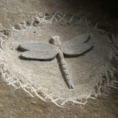 Lehrpfad Natur - Libelle